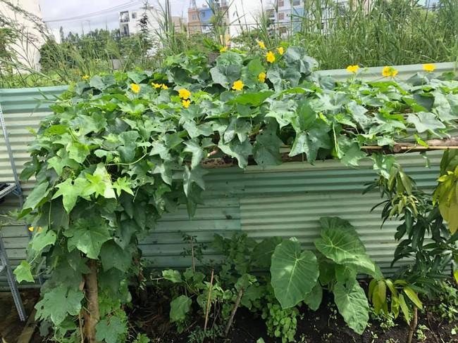 Vườn rau xanh tươi mơn mởn trong biệt thự tiền tỷ do chồng Ốc Thanh Vân trồng tặng 4 mẹ con - Ảnh 14.
