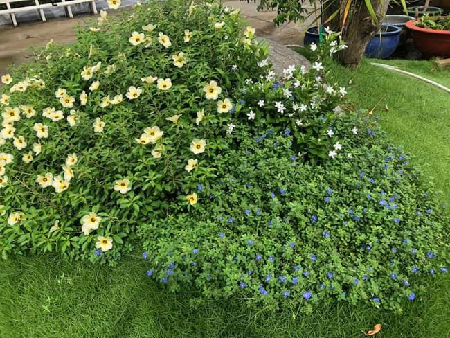 Vườn rau xanh tươi mơn mởn trong biệt thự tiền tỷ do chồng Ốc Thanh Vân trồng tặng 4 mẹ con - Ảnh 13.
