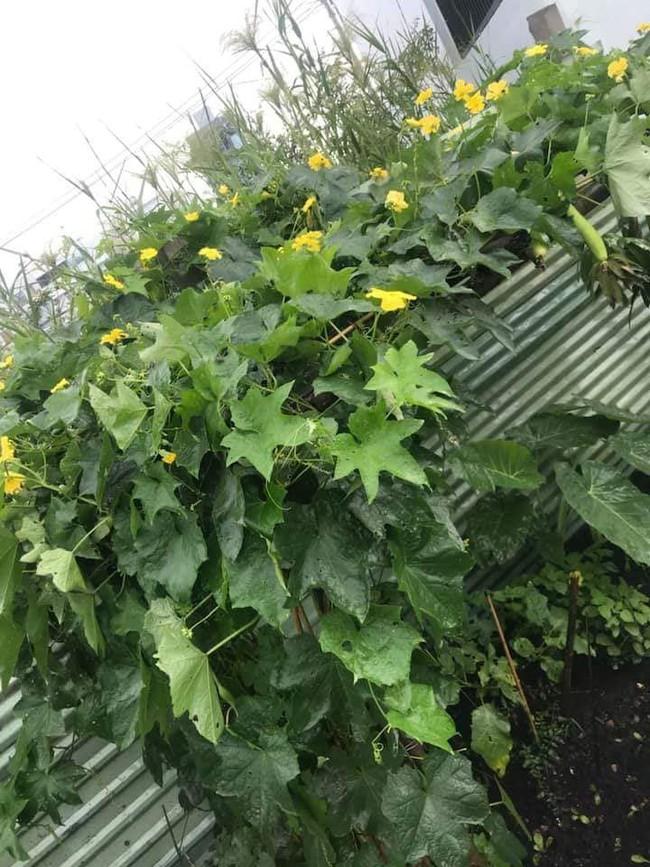 Vườn rau xanh tươi mơn mởn trong biệt thự tiền tỷ do chồng Ốc Thanh Vân trồng tặng 4 mẹ con - Ảnh 6.
