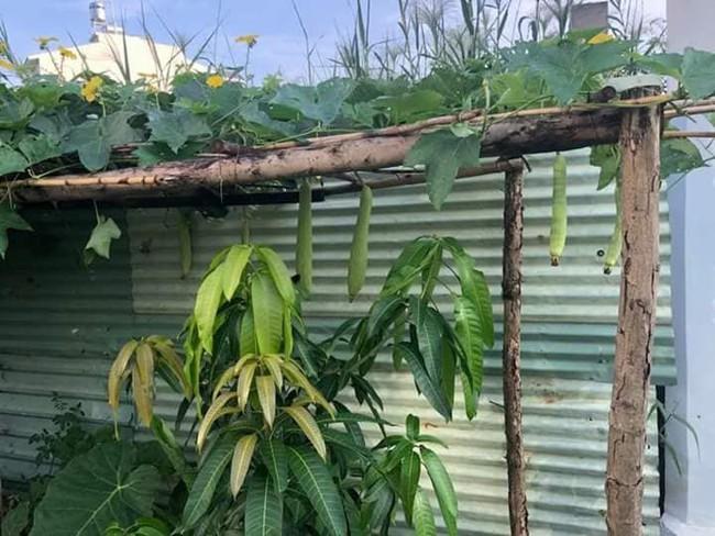 Vườn rau xanh tươi mơn mởn trong biệt thự tiền tỷ do chồng Ốc Thanh Vân trồng tặng 4 mẹ con - Ảnh 9.