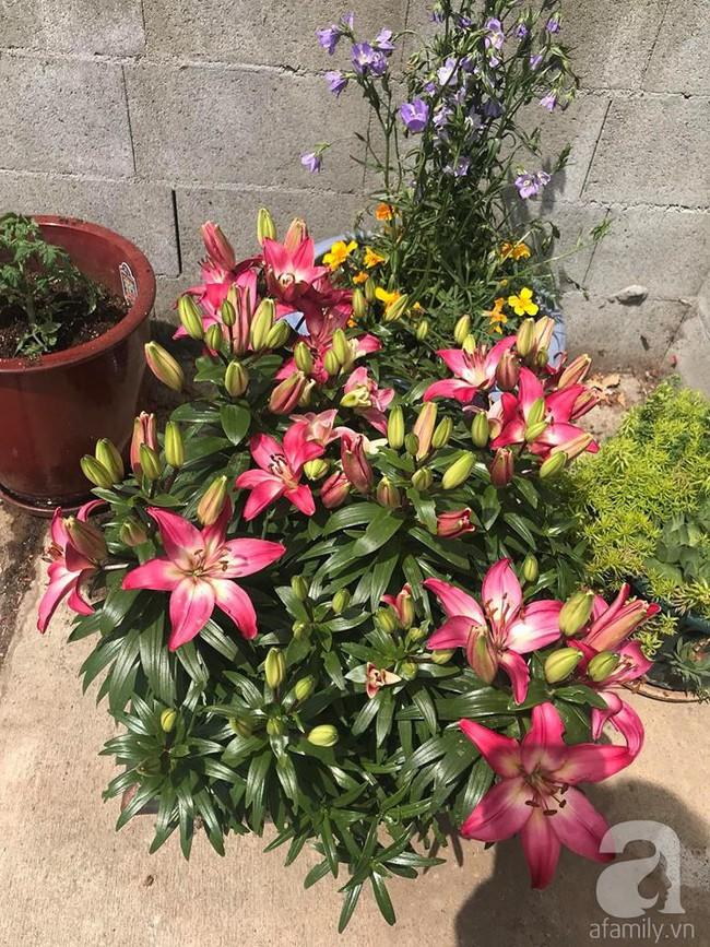 Để chiều lòng vợ, chồng Mỹ thiết kế khu vườn trồng đủ các loại hoa và rau quả Việt để vợ đỡ nhớ quê hương - Ảnh 7.
