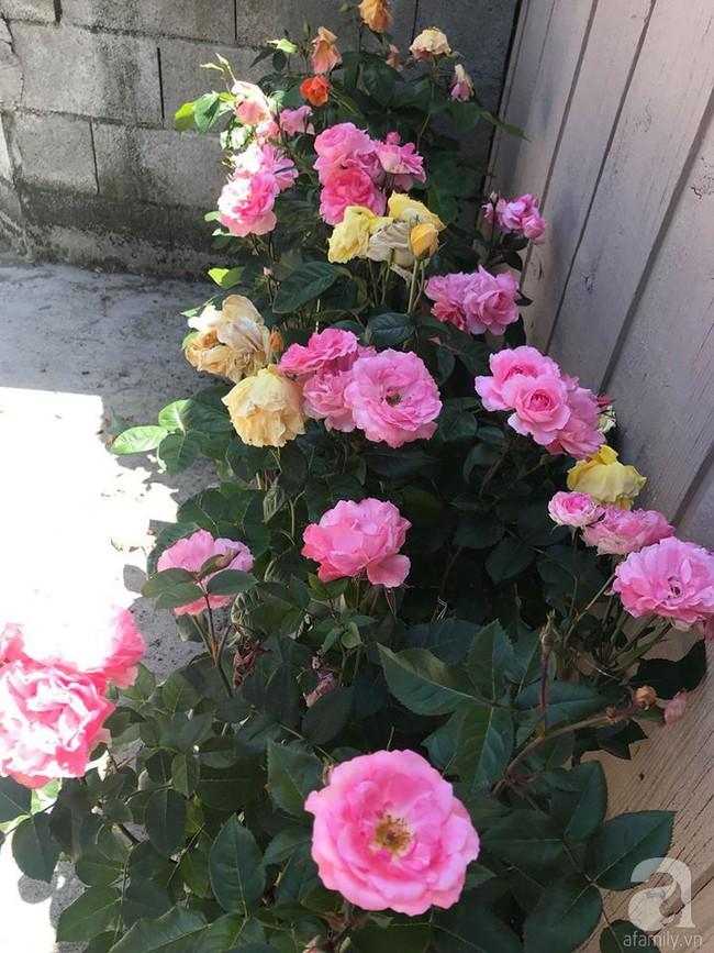 Để chiều lòng vợ, chồng Mỹ thiết kế khu vườn trồng đủ các loại hoa và rau quả Việt để vợ đỡ nhớ quê hương - Ảnh 5.