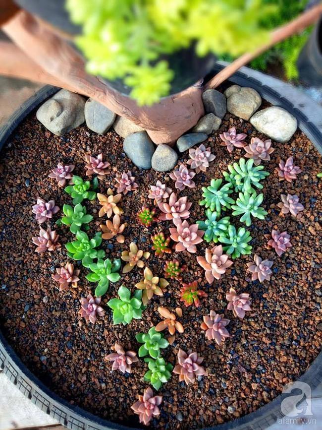 Mẹ bỉm sữa bận rộn chăm con vẫn tạo cả khu vườn sen đá độc đáo từ đồ dùng cũ ở Lâm Đồng - Ảnh 11.
