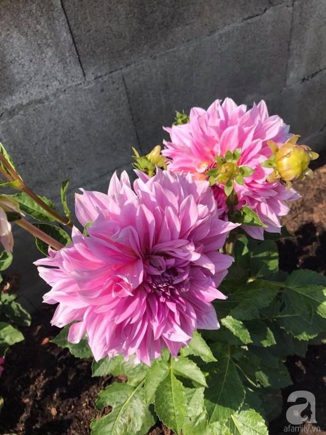 Để chiều lòng vợ, chồng Mỹ thiết kế khu vườn trồng đủ các loại hoa và rau quả Việt để vợ đỡ nhớ quê hương - Ảnh 12.