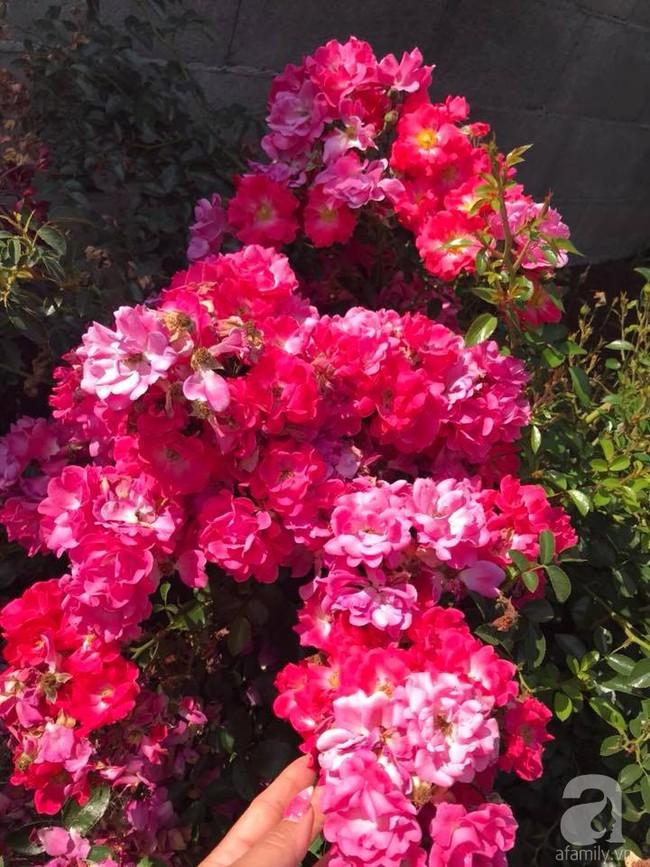 Để chiều lòng vợ, chồng Mỹ thiết kế khu vườn trồng đủ các loại hoa và rau quả Việt để vợ đỡ nhớ quê hương - Ảnh 10.