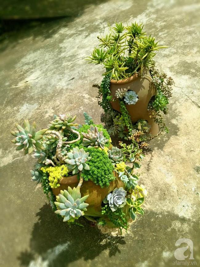 Mẹ bỉm sữa bận rộn chăm con vẫn tạo cả khu vườn sen đá độc đáo từ đồ dùng cũ ở Lâm Đồng - Ảnh 9.