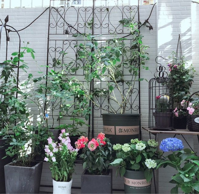 Căn nhà cấp 4 đẹp bình yên với vườn cây cùng không gian nội thất đẹp đến từng mét vuông diện tích - Ảnh 5.