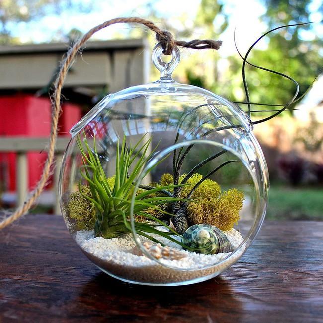Trang trí nhà thật duyên dáng với khu vườn nhỏ xinh bên trong bình thủy tinh - Ảnh 2.