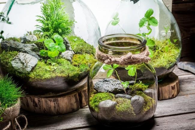 Trang trí nhà thật duyên dáng với khu vườn nhỏ xinh bên trong bình thủy tinh - Ảnh 3.