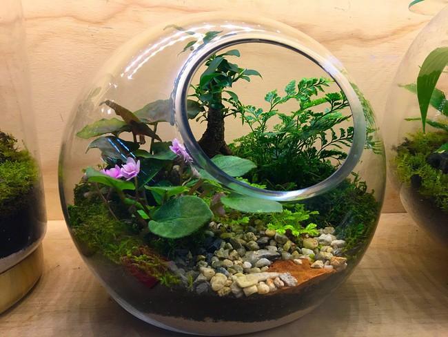 Trang trí nhà thật duyên dáng với khu vườn nhỏ xinh bên trong bình thủy tinh - Ảnh 4.