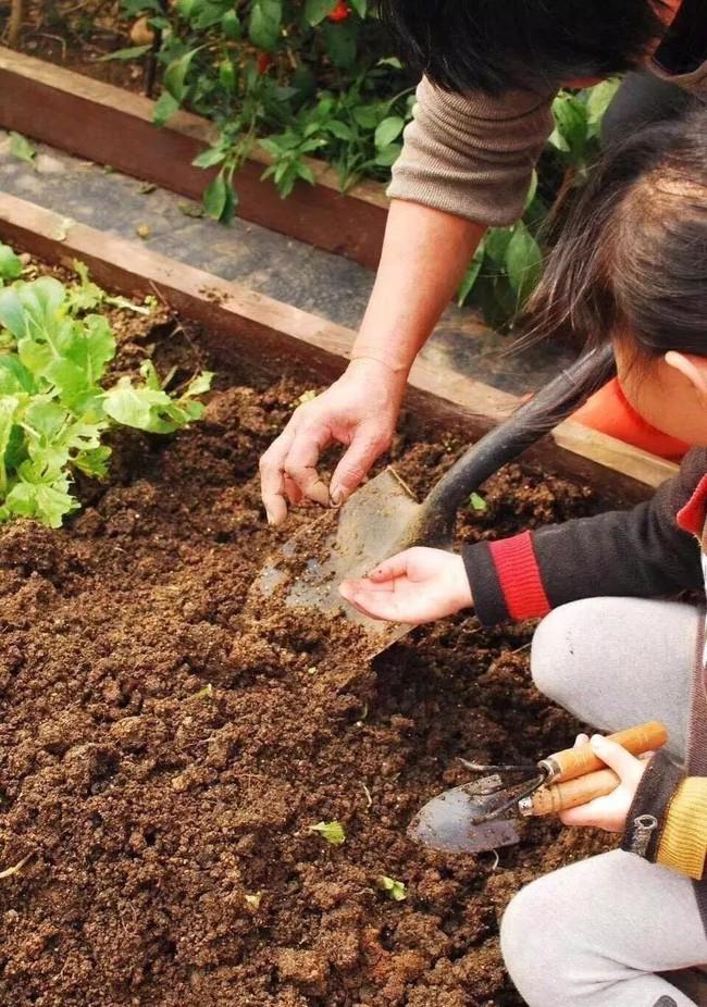Bà mẹ đơn thân cùng con gái 5 tuổi dành trọn hai năm để biến sân thượng thành khu vườn đẹp như cổ tích - Ảnh 10.