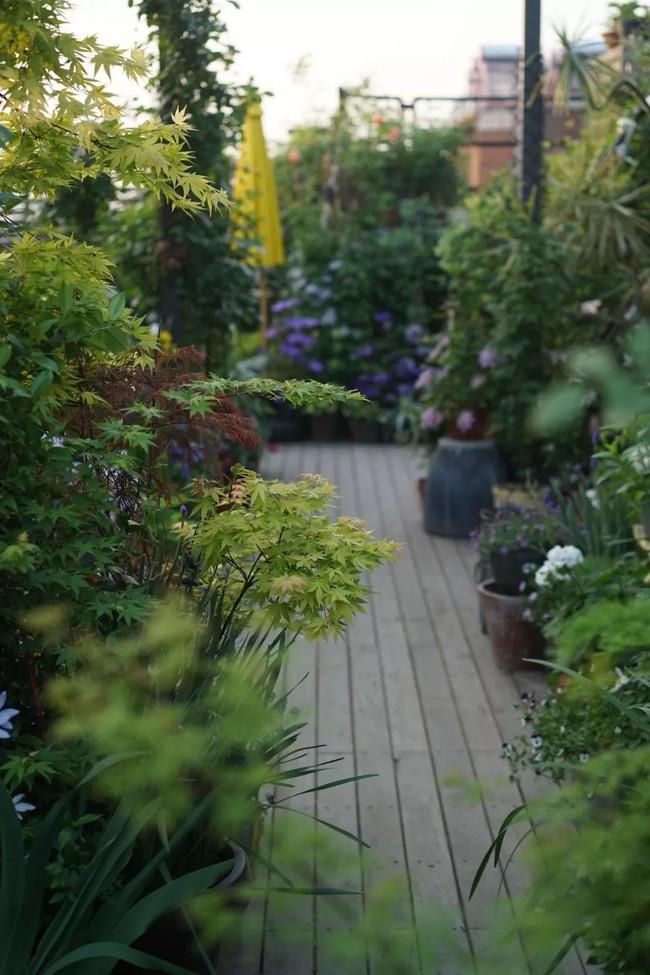 Bà mẹ đơn thân cùng con gái 5 tuổi dành trọn hai năm để biến sân thượng thành khu vườn đẹp như cổ tích - Ảnh 12.