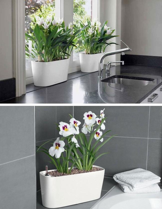 8 thiết kế chậu trồng cây vừa nhỏ gọn lại vô cùng thông minh cho nhà thêm xanh mát   - Ảnh 3.