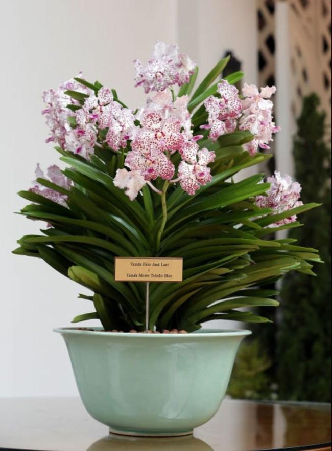 8 loài hoa được lấy cảm hứng từ các thành viên của gia đình Hoàng gia Anh bạn có thể trồng trong vườn nhà mình - Ảnh 6.
