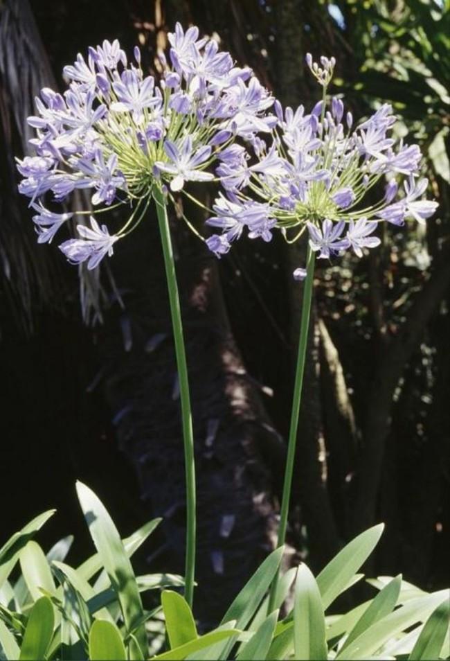 8 loài hoa được lấy cảm hứng từ các thành viên của gia đình Hoàng gia Anh bạn có thể trồng trong vườn nhà mình - Ảnh 7.
