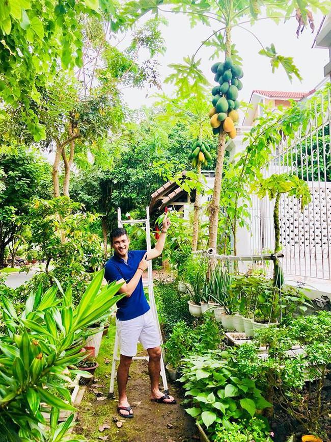 Vợ chồng Công Vinh – Thủy Tiên vui vẻ thu hoạch rau quả sạch trong vườn nhà - Ảnh 3.