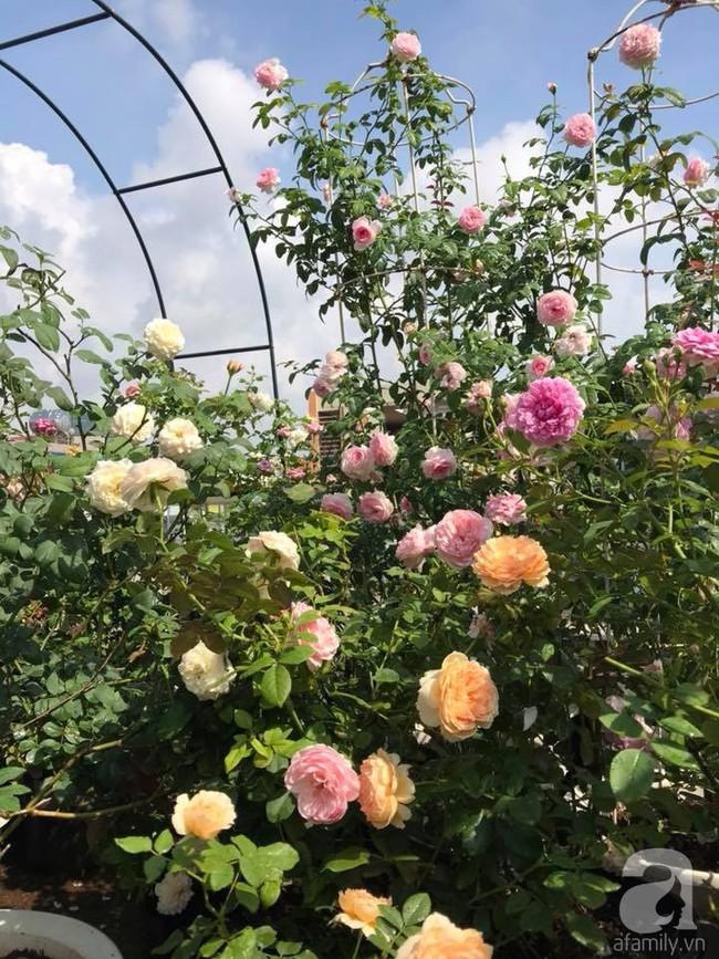 Sau 3 năm trồng hoa hồng, người phụ nữ Hà Nội đã sở hữu một vườn hồng thơm ngào ngạt trên sân thượng - Ảnh 13.