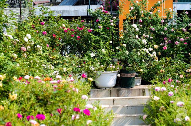 Sau 3 năm trồng hoa hồng, người phụ nữ Hà Nội đã sở hữu một vườn hồng thơm ngào ngạt trên sân thượng - Ảnh 4.