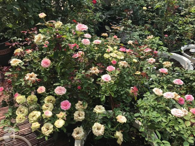 Sau 3 năm trồng hoa hồng, người phụ nữ Hà Nội đã sở hữu một vườn hồng thơm ngào ngạt trên sân thượng - Ảnh 7.