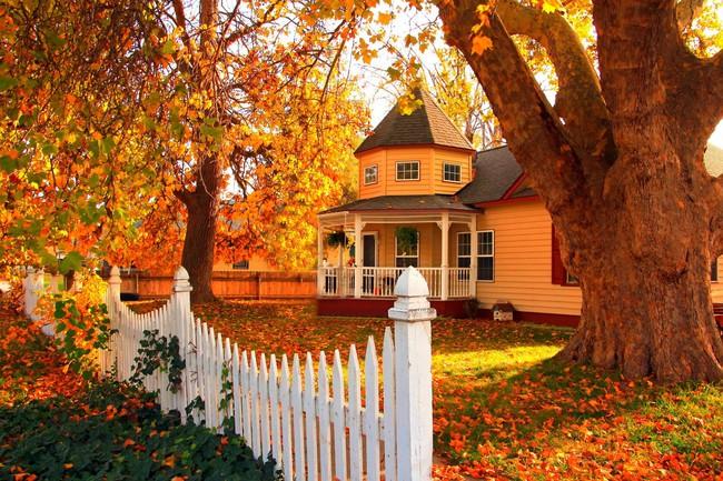 Những ngôi nhà dưới tán lá vàng lãng mạn như một bức tranh phong cảnh tuyệt đẹp - Ảnh 7.