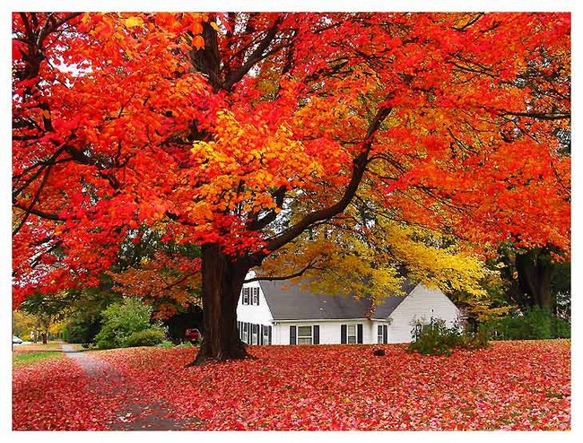 Những ngôi nhà dưới tán lá vàng lãng mạn như một bức tranh phong cảnh tuyệt đẹp - Ảnh 4.