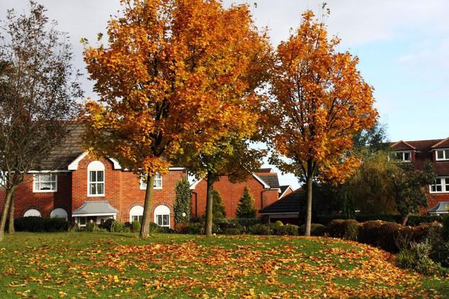 Những ngôi nhà dưới tán lá vàng lãng mạn như một bức tranh phong cảnh tuyệt đẹp - Ảnh 11.