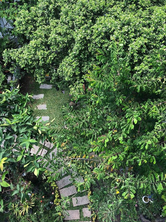 Ngắm vườn rau sạch và hoa tươi vô cùng bình yên của vợ chồng nghệ sĩ Hồng Vân và Lê Tuấn Anh - Ảnh 14.