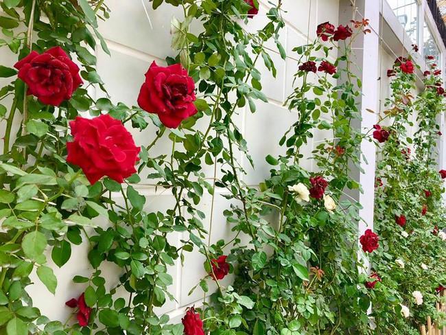 Ngắm vườn rau sạch và hoa tươi vô cùng bình yên của vợ chồng nghệ sĩ Hồng Vân và Lê Tuấn Anh - Ảnh 18.