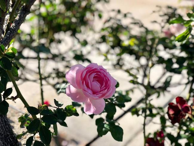 Ngắm vườn rau sạch và hoa tươi vô cùng bình yên của vợ chồng nghệ sĩ Hồng Vân và Lê Tuấn Anh - Ảnh 16.