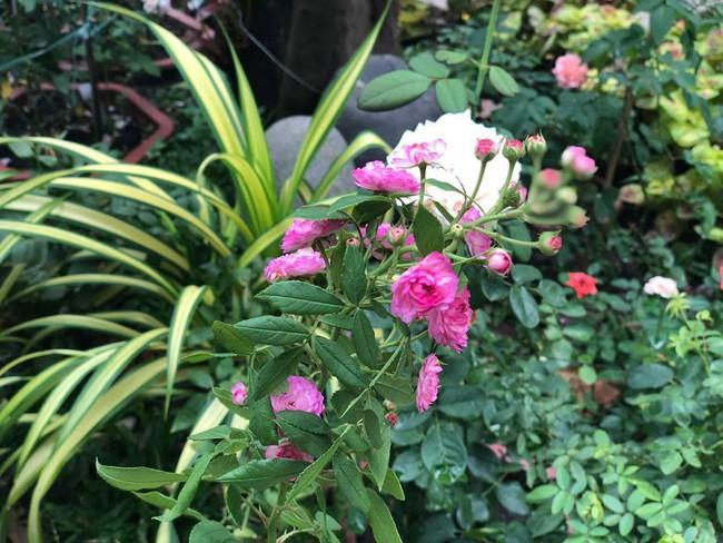 Ngắm vườn rau sạch và hoa tươi vô cùng bình yên của vợ chồng nghệ sĩ Hồng Vân và Lê Tuấn Anh - Ảnh 15.