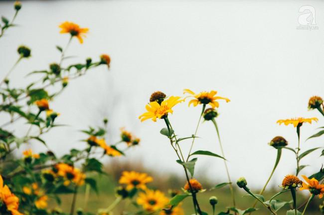 Tháng 11, về Đà Lạt ngắm hoa dã quỳ nở vàng rực rỡ khắp các nẻo đường đi - Ảnh 6.