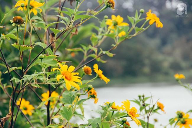 Tháng 11, về Đà Lạt ngắm hoa dã quỳ nở vàng rực rỡ khắp các nẻo đường đi - Ảnh 4.