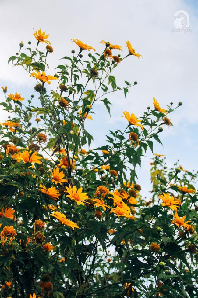 Tháng 11, về Đà Lạt ngắm hoa dã quỳ nở vàng rực rỡ khắp các nẻo đường đi - Ảnh 13.