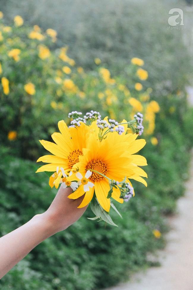 Tháng 11, về Đà Lạt ngắm hoa dã quỳ nở vàng rực rỡ khắp các nẻo đường đi - Ảnh 11.