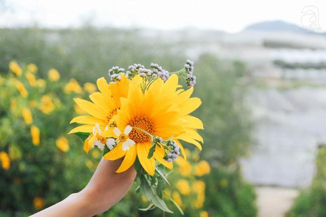 Tháng 11, về Đà Lạt ngắm hoa dã quỳ nở vàng rực rỡ khắp các nẻo đường đi - Ảnh 10.