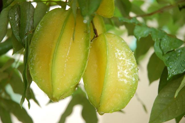 Đã có nhiều người tử vong vì ngộ độc sau khi ăn khế: Cảnh báo những đối tượng không nên ăn loại trái cây này - Ảnh 3.