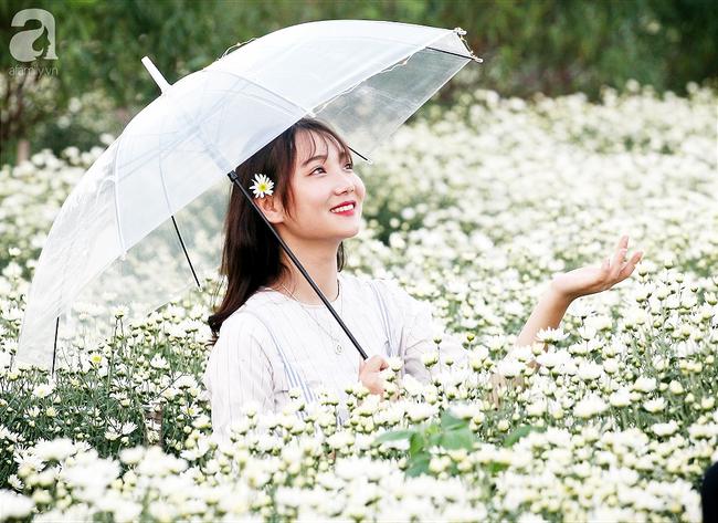 Tháng 11 Hà Nội, đến đâu sẽ nhìn thấy gái xinh nhiều nhất? Xin thưa, vườn cúc họa mi! - Ảnh 13.