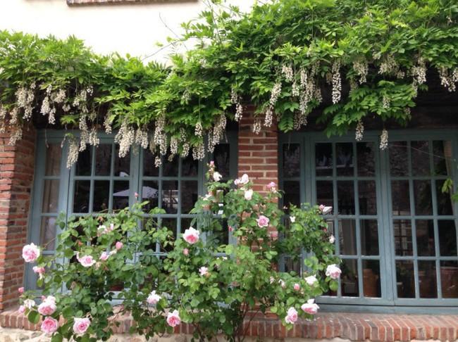 Ngắm những ngôi nhà thơ mộng với giàn hoa đẹp như cổ tích ở làng quê nước Pháp - Ảnh 4.