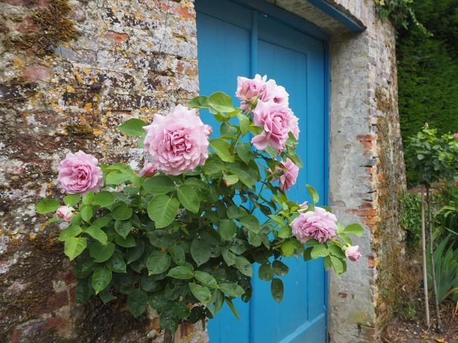 Ngắm những ngôi nhà thơ mộng với giàn hoa đẹp như cổ tích ở làng quê nước Pháp - Ảnh 1.