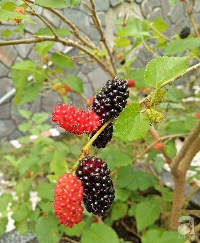 Kinh nghiệm trồng cả vườn cây trái xum xuê như trang trại trên sân thượng của mẹ đảm ở Biên Hòa - Ảnh 6.