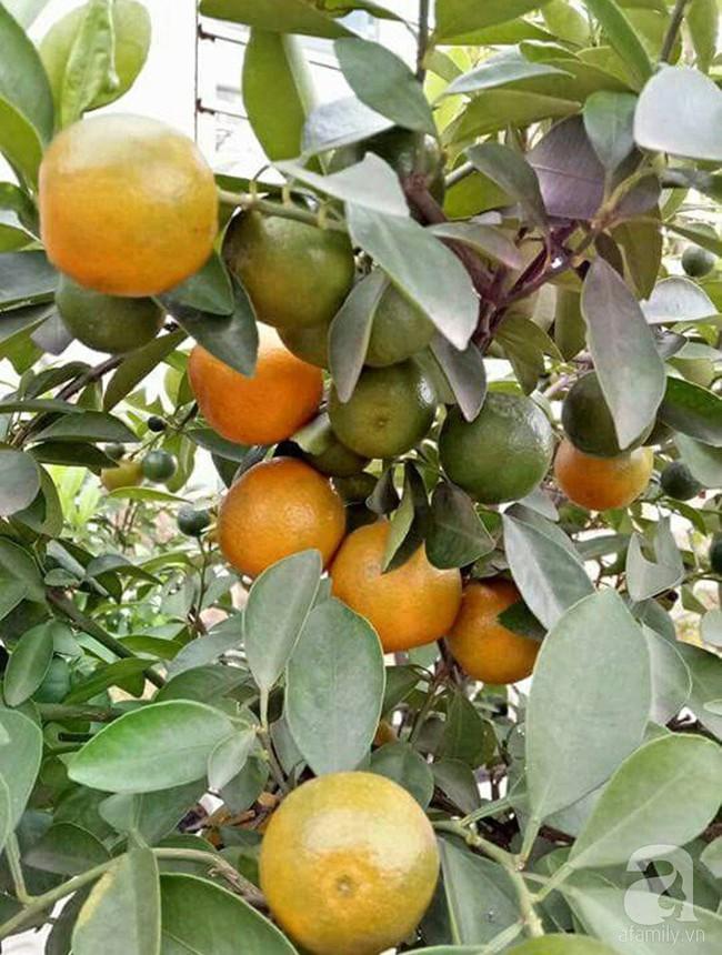 Kinh nghiệm trồng cả vườn cây trái xum xuê như trang trại trên sân thượng của mẹ đảm ở Biên Hòa - Ảnh 10.