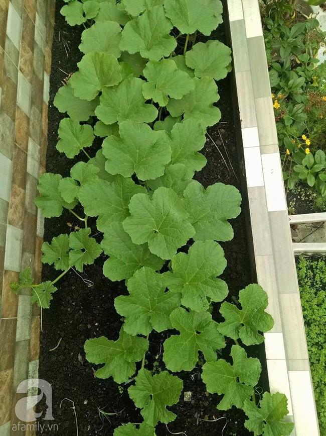 Kinh nghiệm trồng cả vườn cây trái xum xuê như trang trại trên sân thượng của mẹ đảm ở Biên Hòa - Ảnh 17.