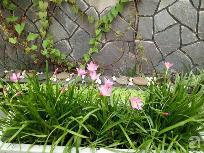 Kinh nghiệm trồng cả vườn cây trái xum xuê như trang trại trên sân thượng của mẹ đảm ở Biên Hòa - Ảnh 21.
