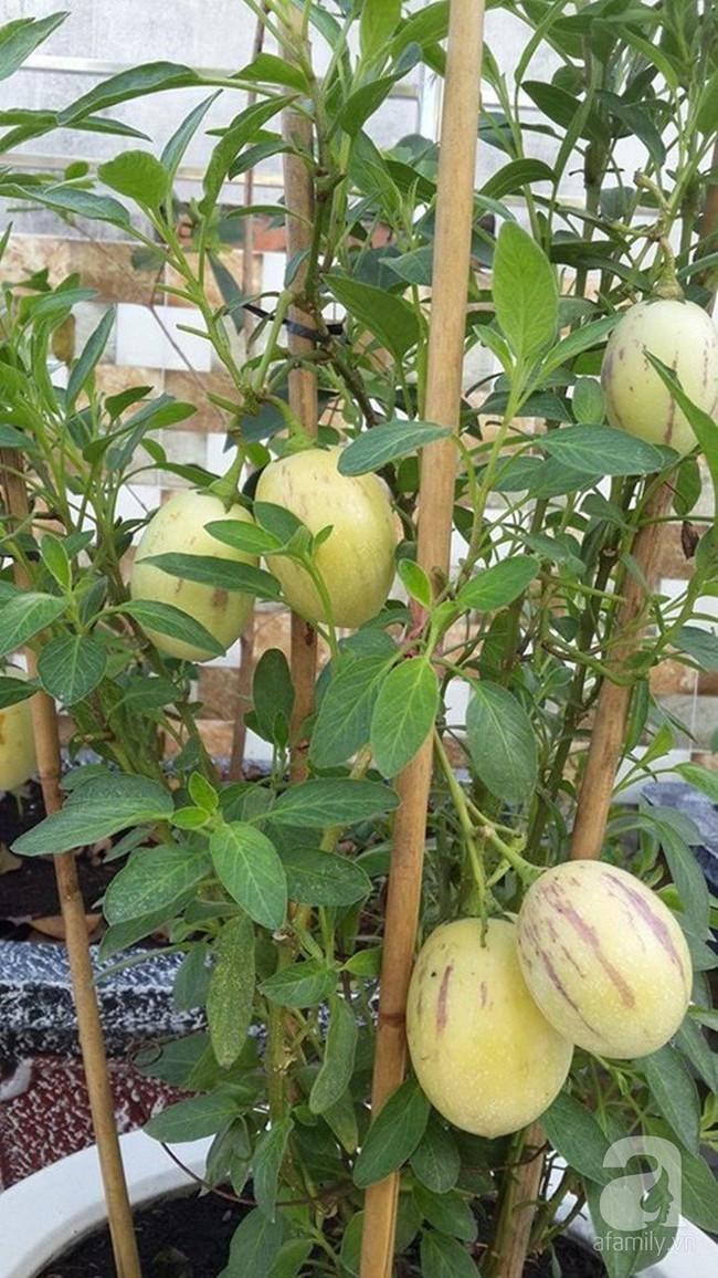Kinh nghiệm trồng cả vườn cây trái xum xuê như trang trại trên sân thượng của mẹ đảm ở Biên Hòa - Ảnh 2.