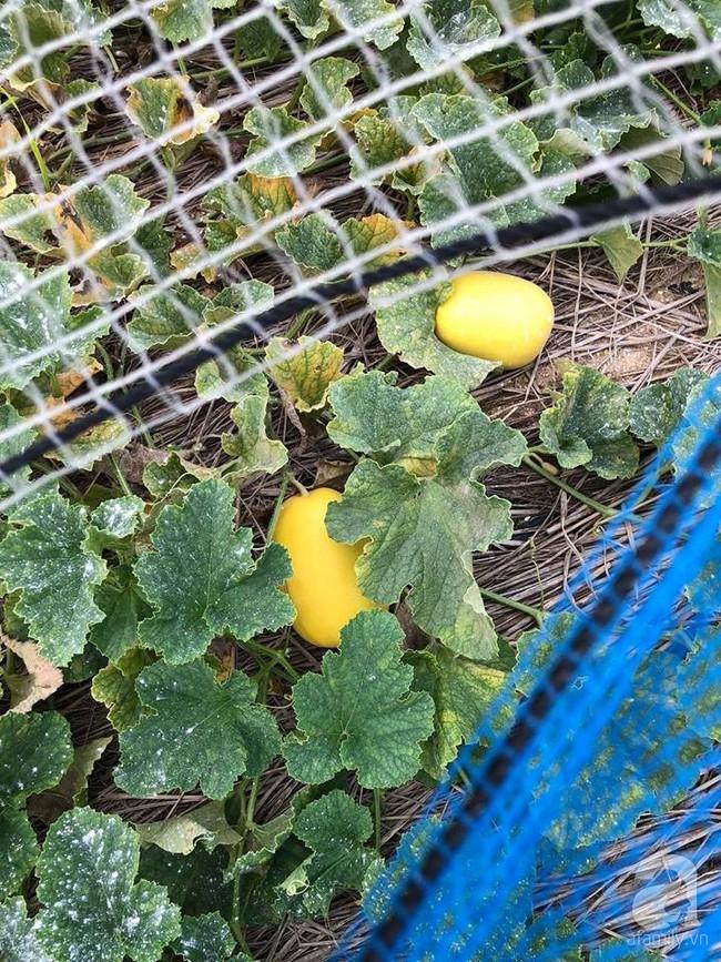 Khu vườn 1000m² giúp mẹ Việt ở Nhật thỏa sức trồng đủ loại rau quả, cây trái của quê hương - Ảnh 14.