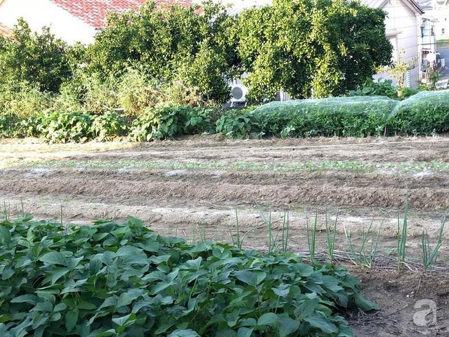 Khu vườn 1000m² giúp mẹ Việt ở Nhật thỏa sức trồng đủ loại rau quả, cây trái của quê hương - Ảnh 9.