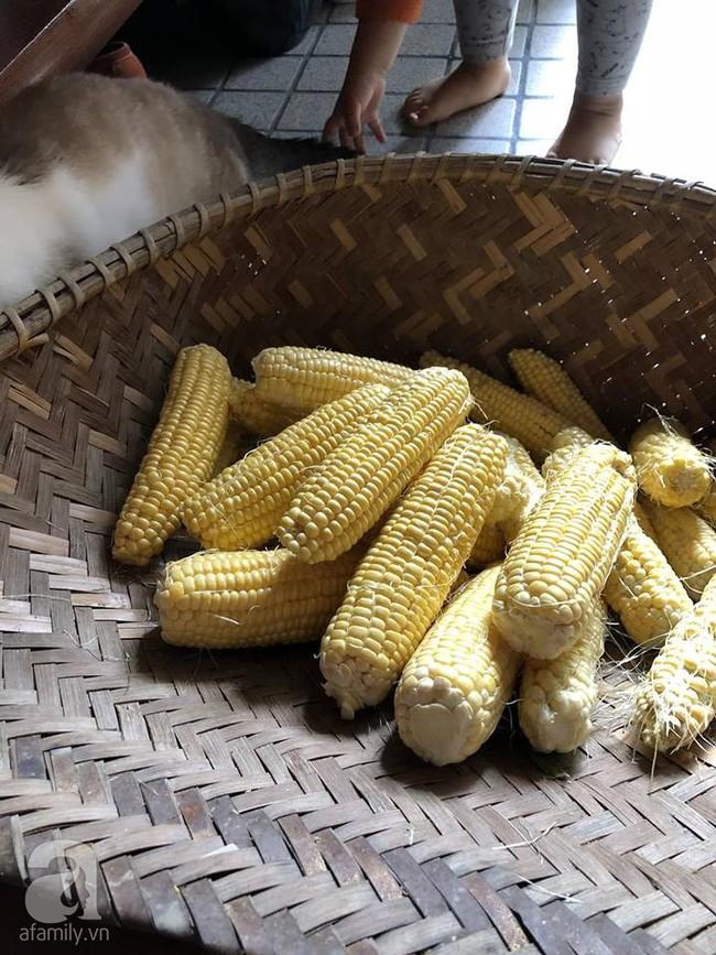 Khu vườn 1000m² giúp mẹ Việt ở Nhật thỏa sức trồng đủ loại rau quả, cây trái của quê hương - Ảnh 16.