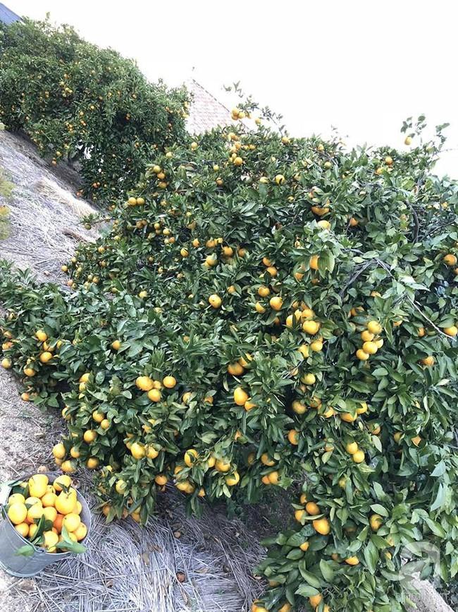 Khu vườn 1000m² giúp mẹ Việt ở Nhật thỏa sức trồng đủ loại rau quả, cây trái của quê hương - Ảnh 5.