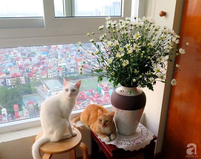 Làm đẹp nhà đón mùa đông Hà Nội với cúc họa mi đẹp dịu dàng, bình yên  - Ảnh 19.