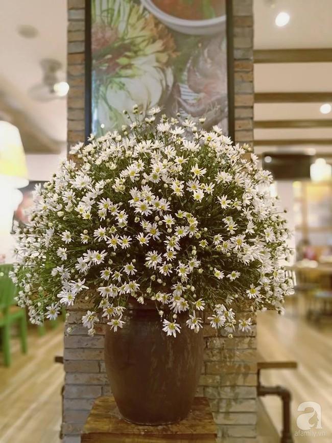 Làm đẹp nhà đón mùa đông Hà Nội với cúc họa mi đẹp dịu dàng, bình yên  - Ảnh 28.